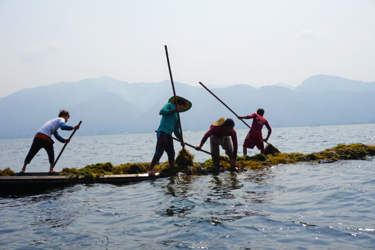 Myanmar photos harvesting seaweed