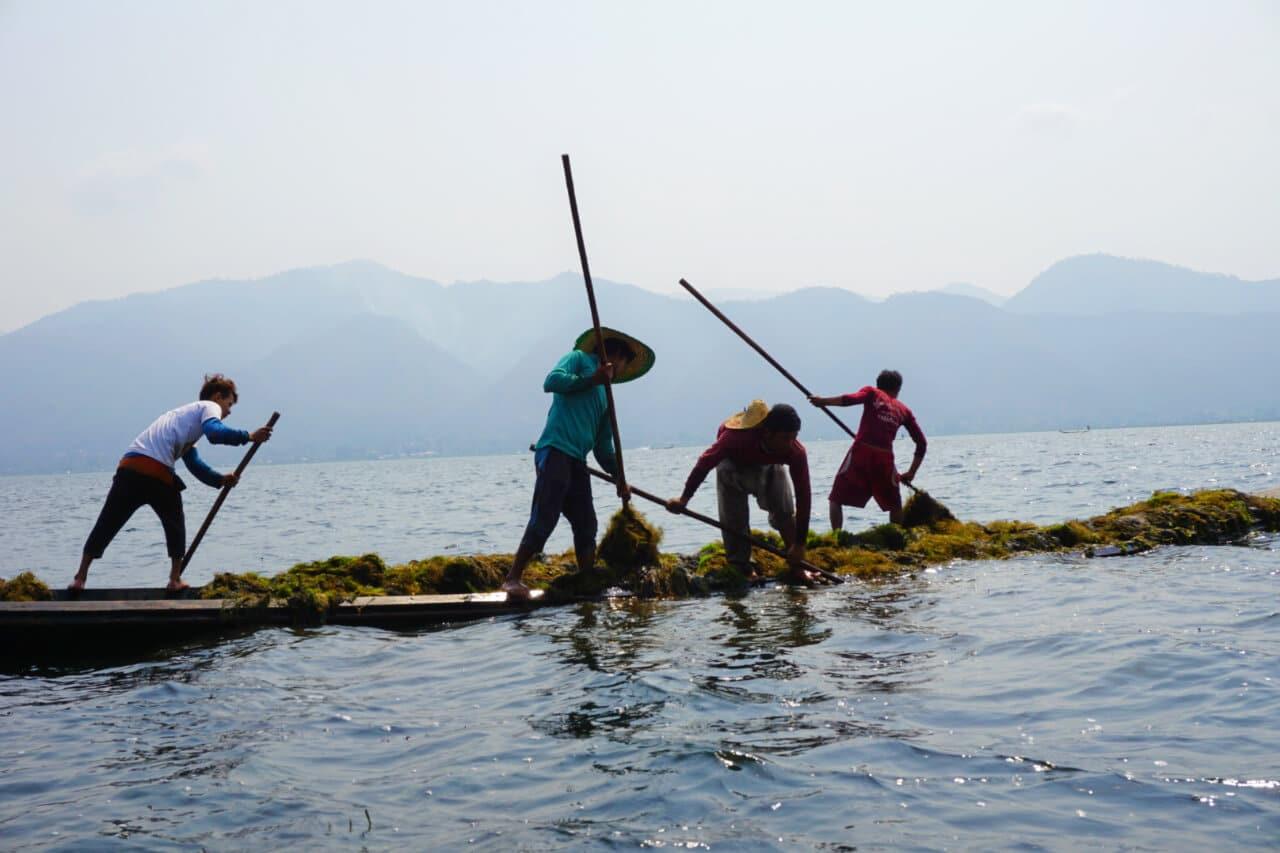 Myanmar photos harvesting seaweed