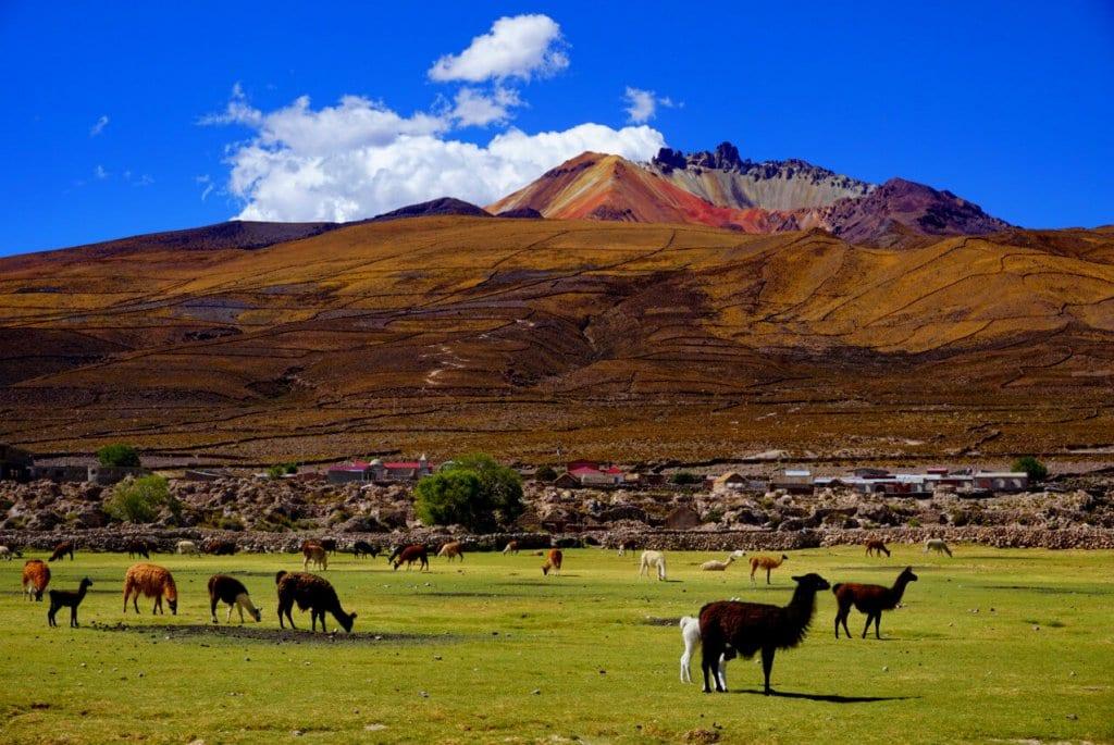 Llamas in Bolivia near Uyuni Salt Flats