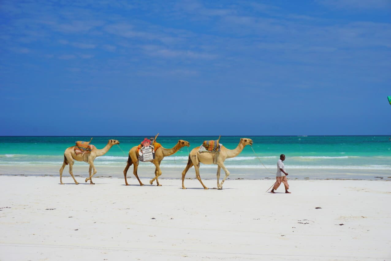 Camels on a beach in Kenya