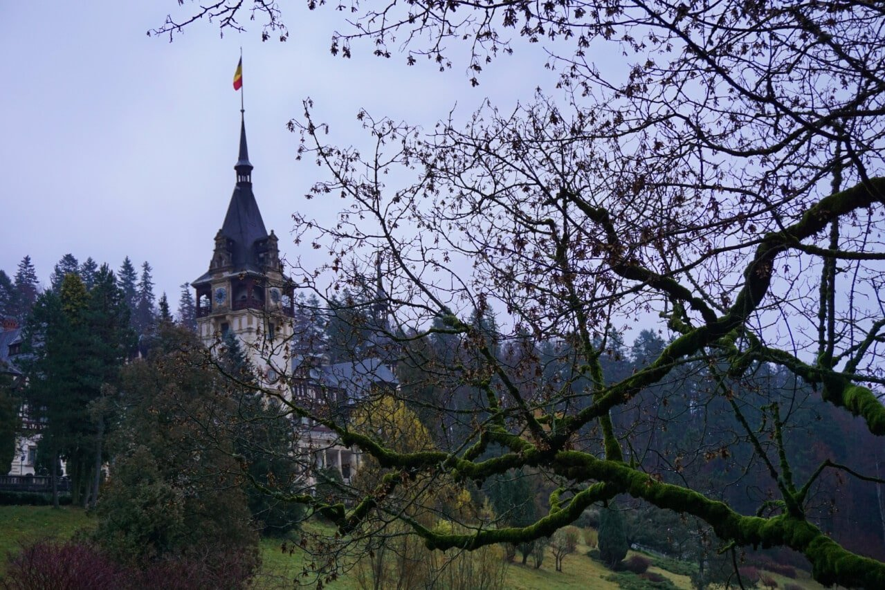 A tree in front of Peles Castle in Romania
