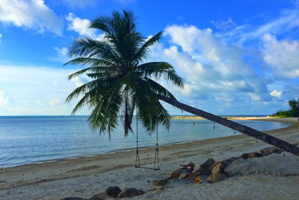 Solo Travel Thailand: A palm on a beach
