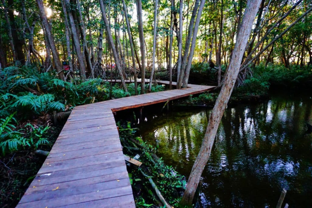 A path through the mangroves of the Ria Celestun