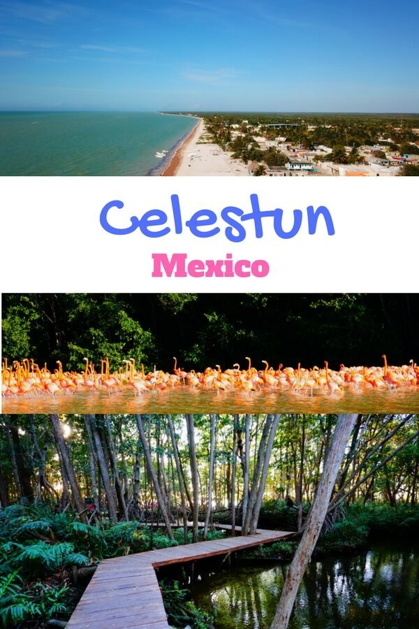 This guide to Celestun Mexico will tell you everything you need to know to explore Celestun's beaches and see the famous flamingos! #celestun #mexico #flamingos