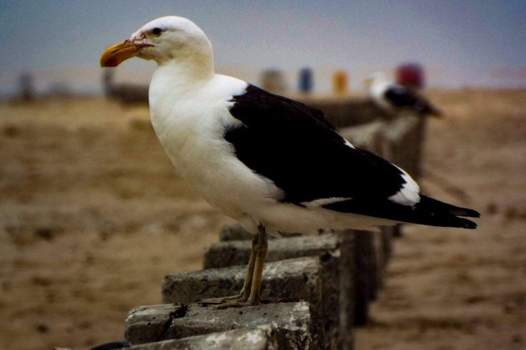 A bird in Swakopmund Namibia