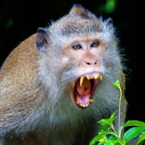 Crazy monkeys in Thailand: another reason to get travel insurance