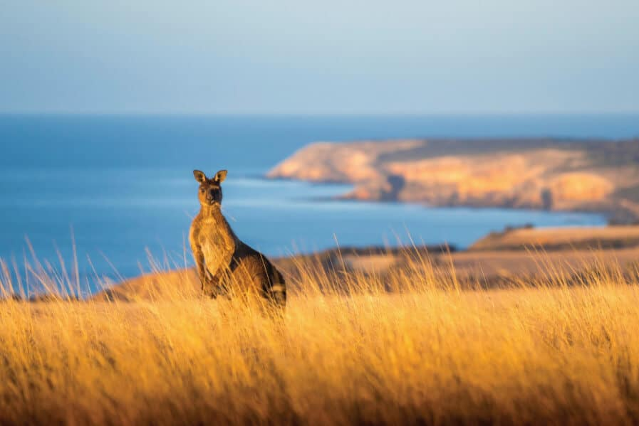 Kangroo Island, South Australia, a top emerging destination in Australia