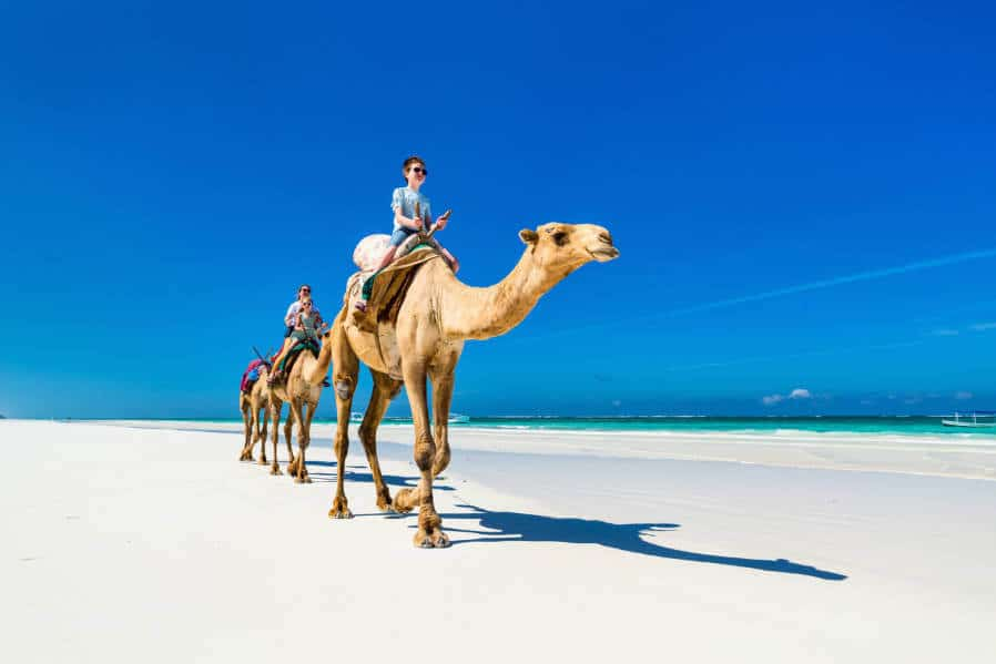 Camels on Diani Beach, Kenya - our judges' top destination in Africa