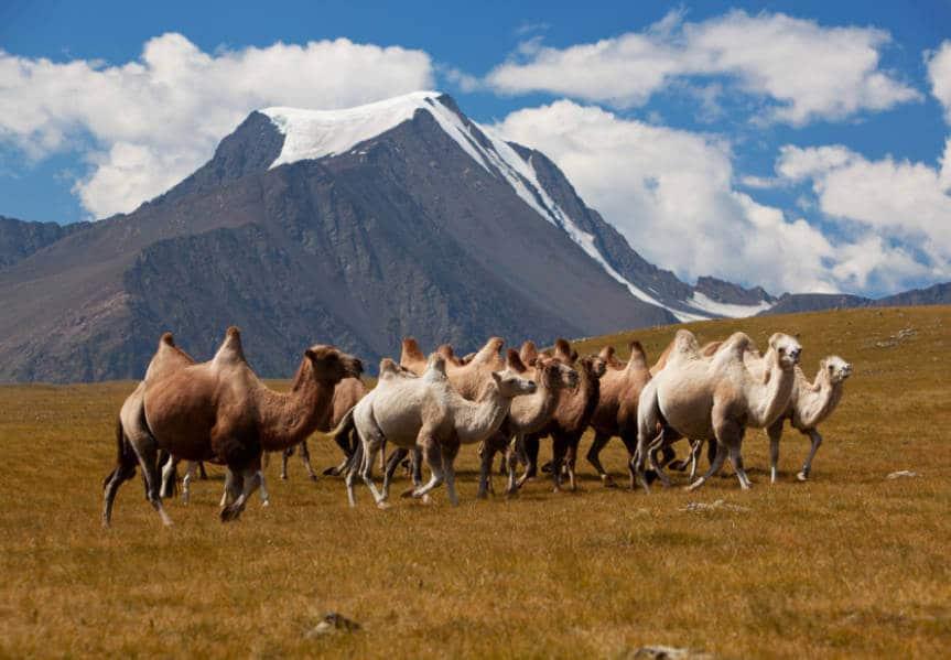 Altay mountains. Mongolia