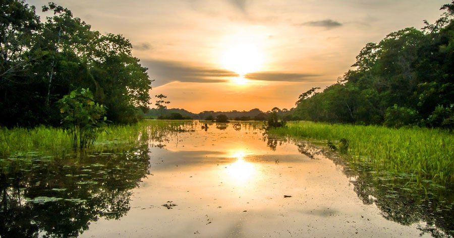 View of the river in Amazon Rainforest and the sunset