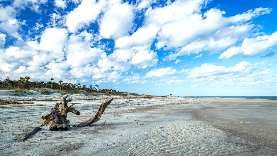 View of a tree trunk on the sand of Amelia Island