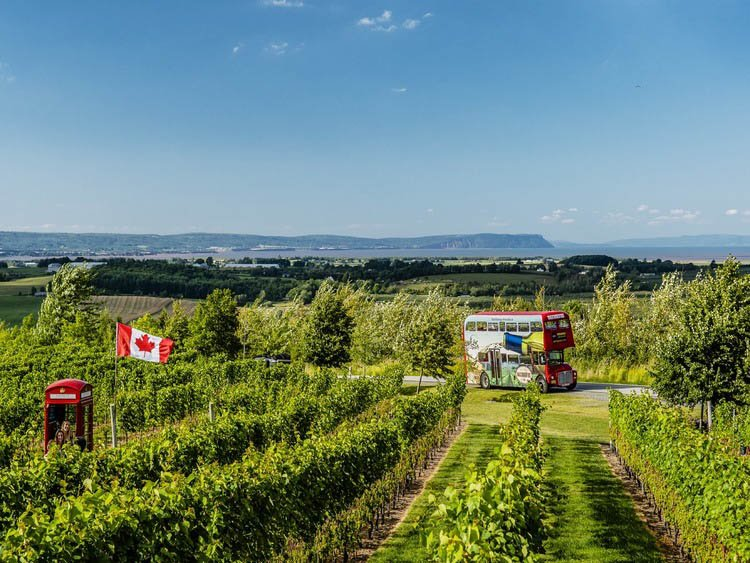 Magic winery bus in a vineyard in Nova Scotia