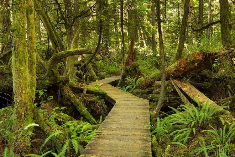 A forest of lush green moss and trees on Vancouver Island, Canada