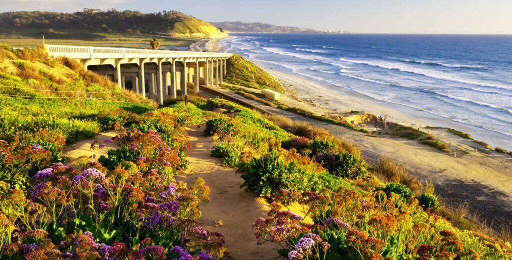 View of spring flower blooms at one of the San Diego beaches