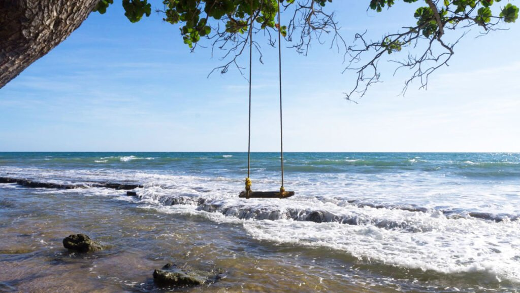 View of a swing hanging on a tree in a shoreline