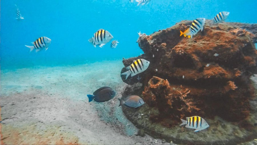View of fishes under the sea in Blue Heron Bridge