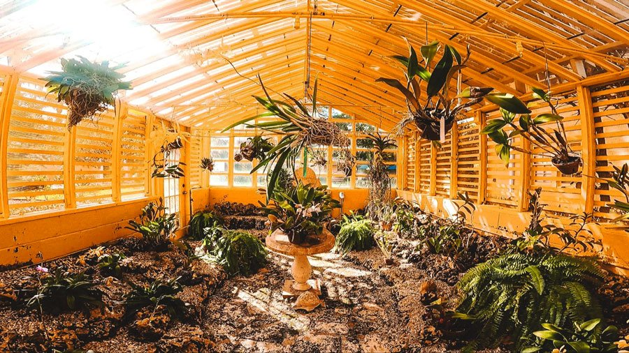 View of exotic plants in a garden