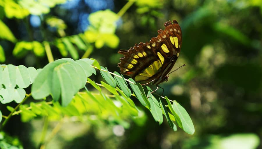 View of a butterfly on a plant