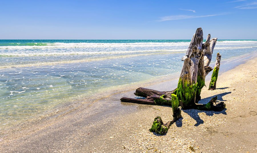 View of a dead tree trunk with a seaweed on it in a shoreline