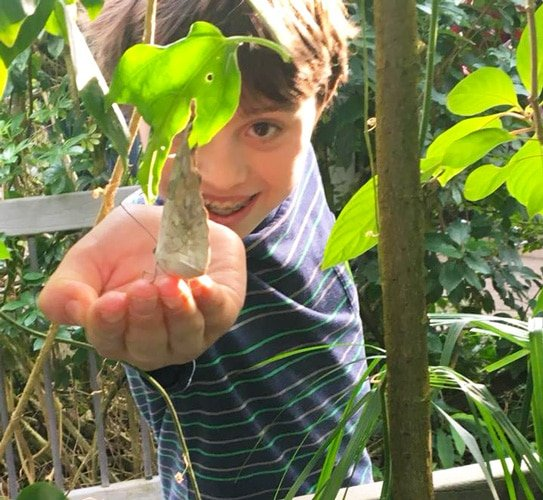 View of the author's son having fun in Butterfly Pavilion