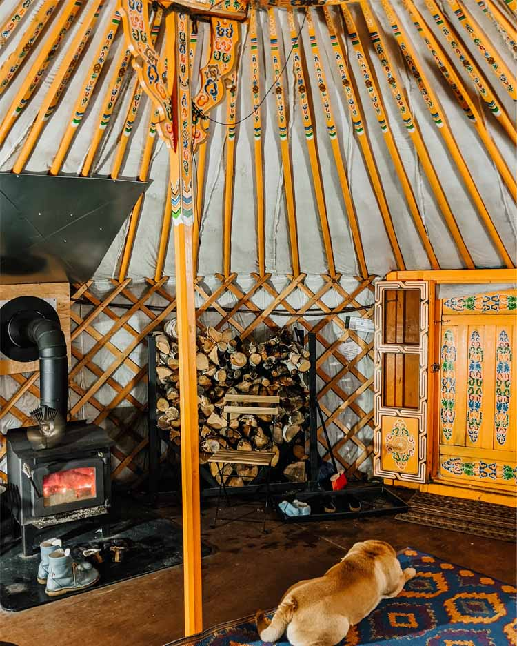 Dog inside Cabot Shore dome