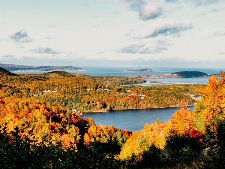 Cape Breton Autumn Leaves
