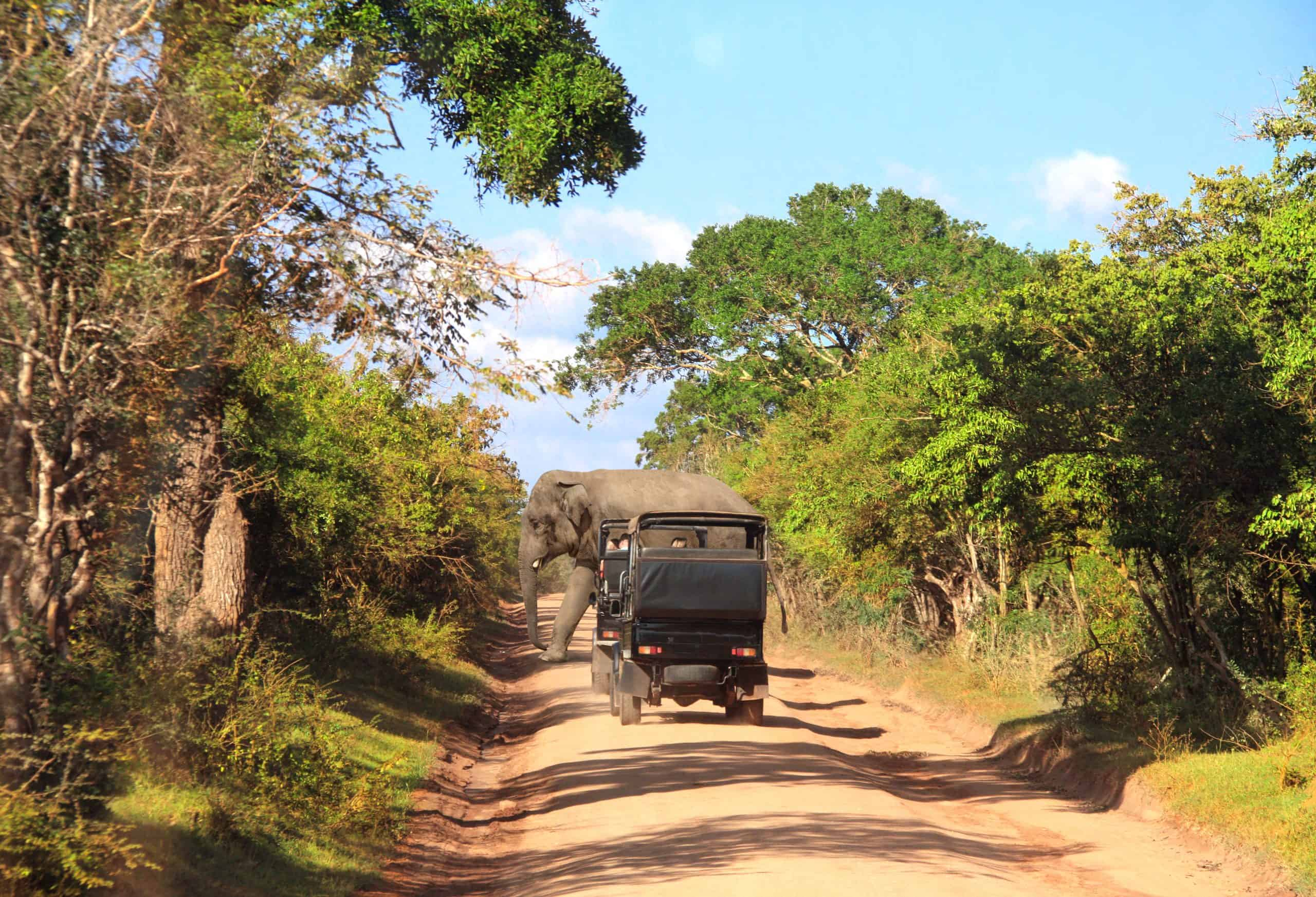 Elephant and tourists in cars and  on the dusty road in Yala National Park, a top place to visit in Sri Lanka
