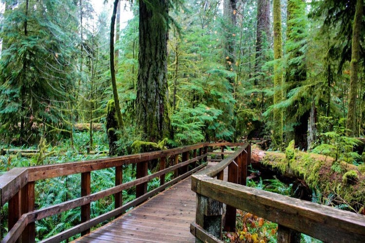 A mossy boardwalk runs through Cathedral Grove in Vancouver Island, Canada