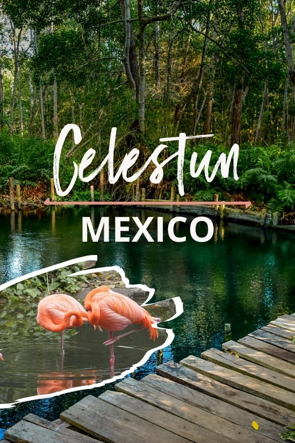 Looking for a great #TravelGuide for your trip to #Celestun #Mexico? Then look no further. There are so many things to do in this #Yucatan province. From relaxing at the Playa Celestun to visiting the Ria Celestun Biosphere Reserve; from watching the incredible flamingos to taking a boat tour at the enchanting mangroves, we got you covered. As a bonus, we'll even provide practical tips such as how to go to Celestun from Merida.