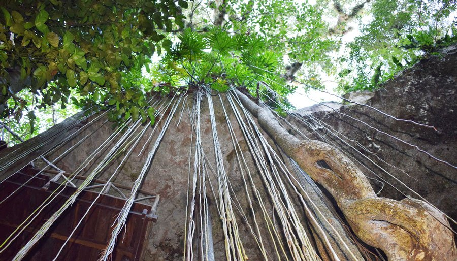 The Cenote SAC-AUA from below
