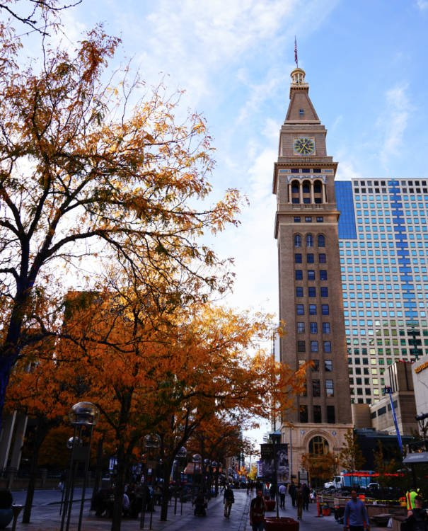 View of a tree and the Daniels and Fisher tower in Denver
