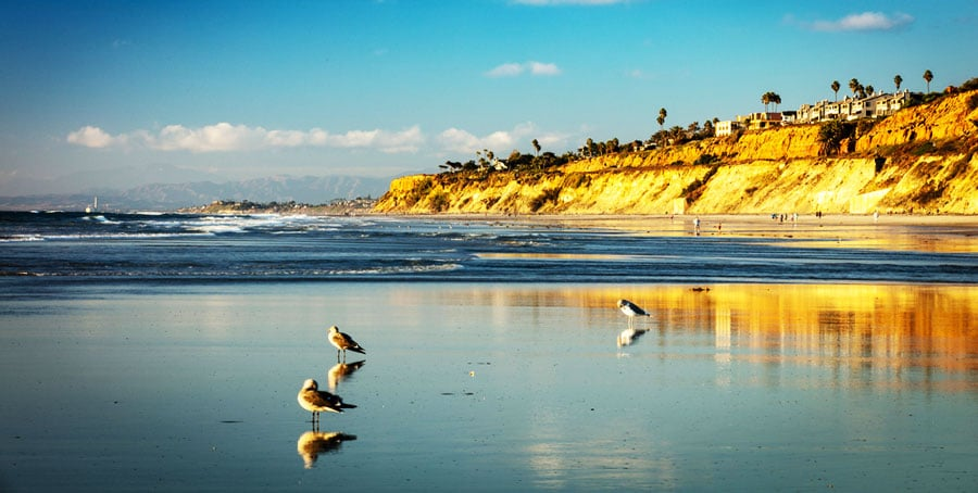 View of some birds by the beach in Del Mar Beach