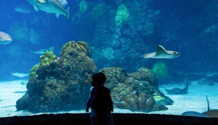 A child at the Denver Aquarium