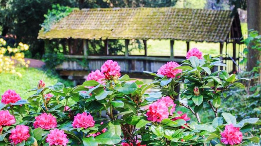View of a farm with beautiful flowers