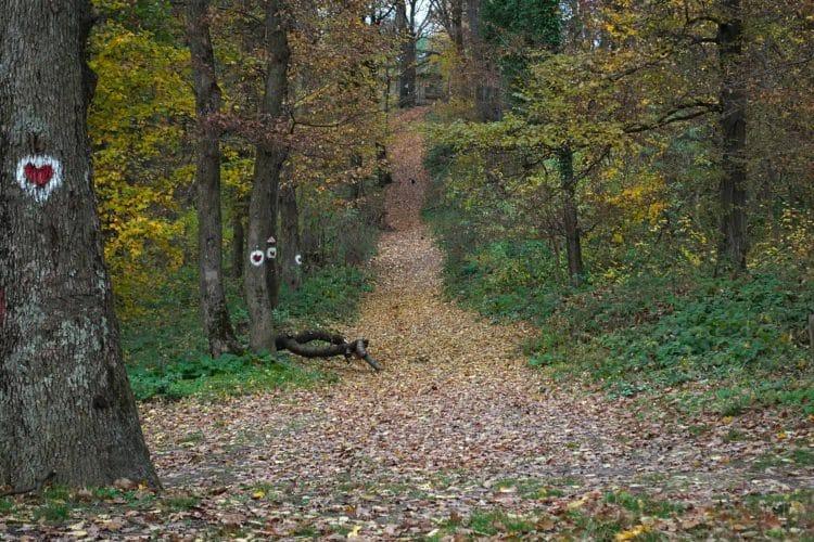 Fruška Gora trees