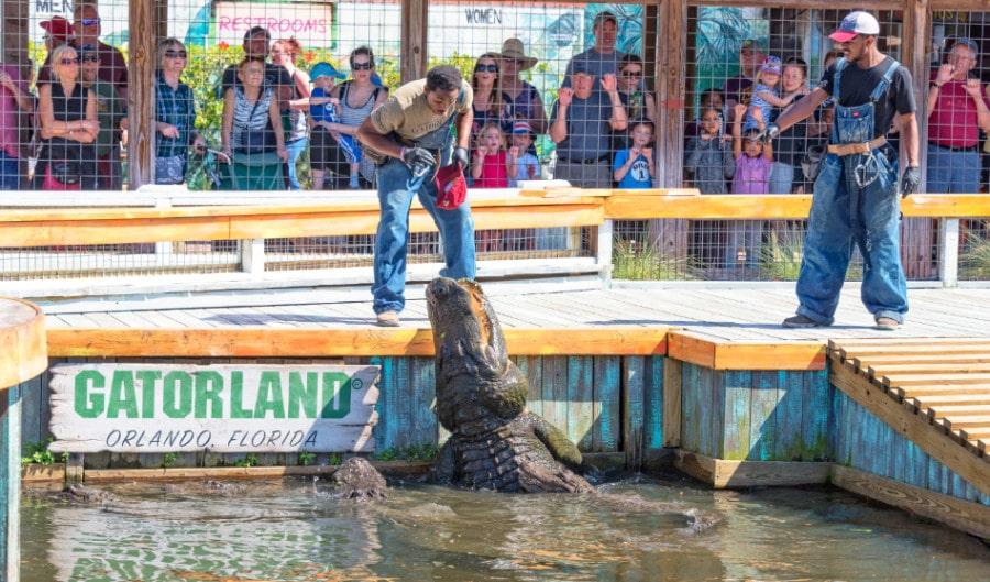 View of performers at Gatorland Florida