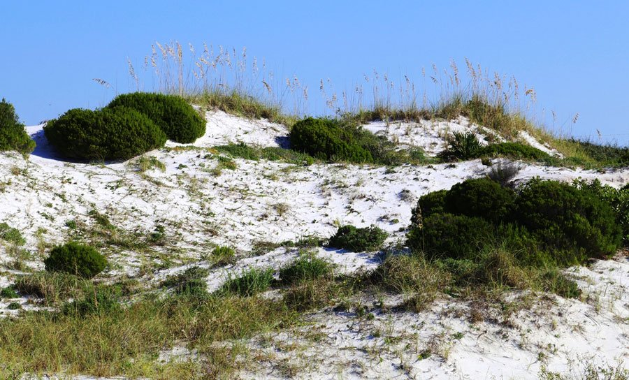 View of sand dunes in Henderson Beach State Park