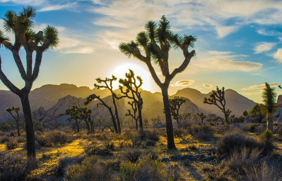 View of the beautiful sunset on Joshua Tree National Park