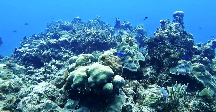 View of coral reefs under Key Largo