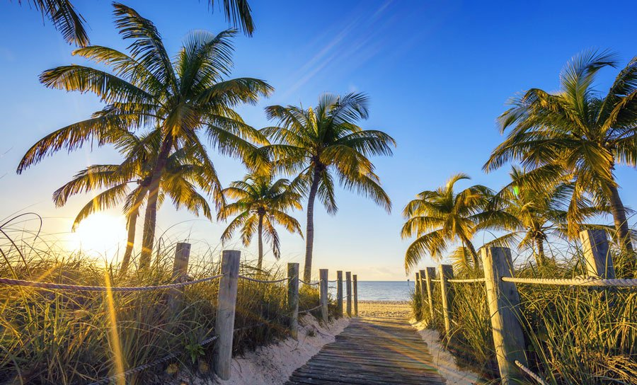 View of a pathway to the beach and some palm trees