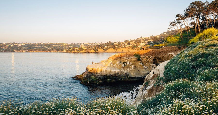 View of a rocky coast and some flowers in La Jolla Cove