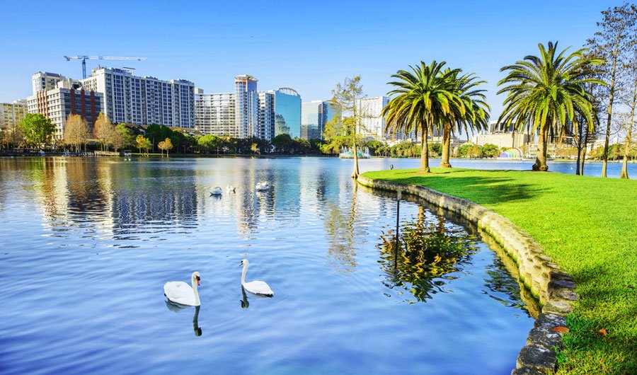 View of swans on the Lake Eola