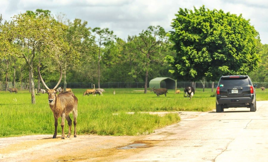 View of different kind of animals in Lion Country Safari in West Palm Beach