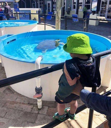 View of the author's nephew watching the sea turtle