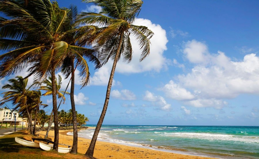 View of the Luquillo Beach and some palm tree in it