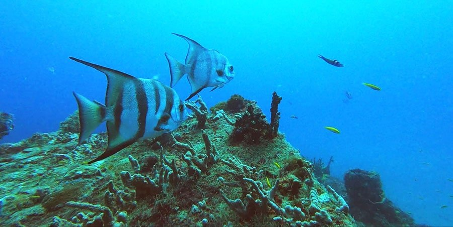 View of fishes and natural coral reefs in Key Largo