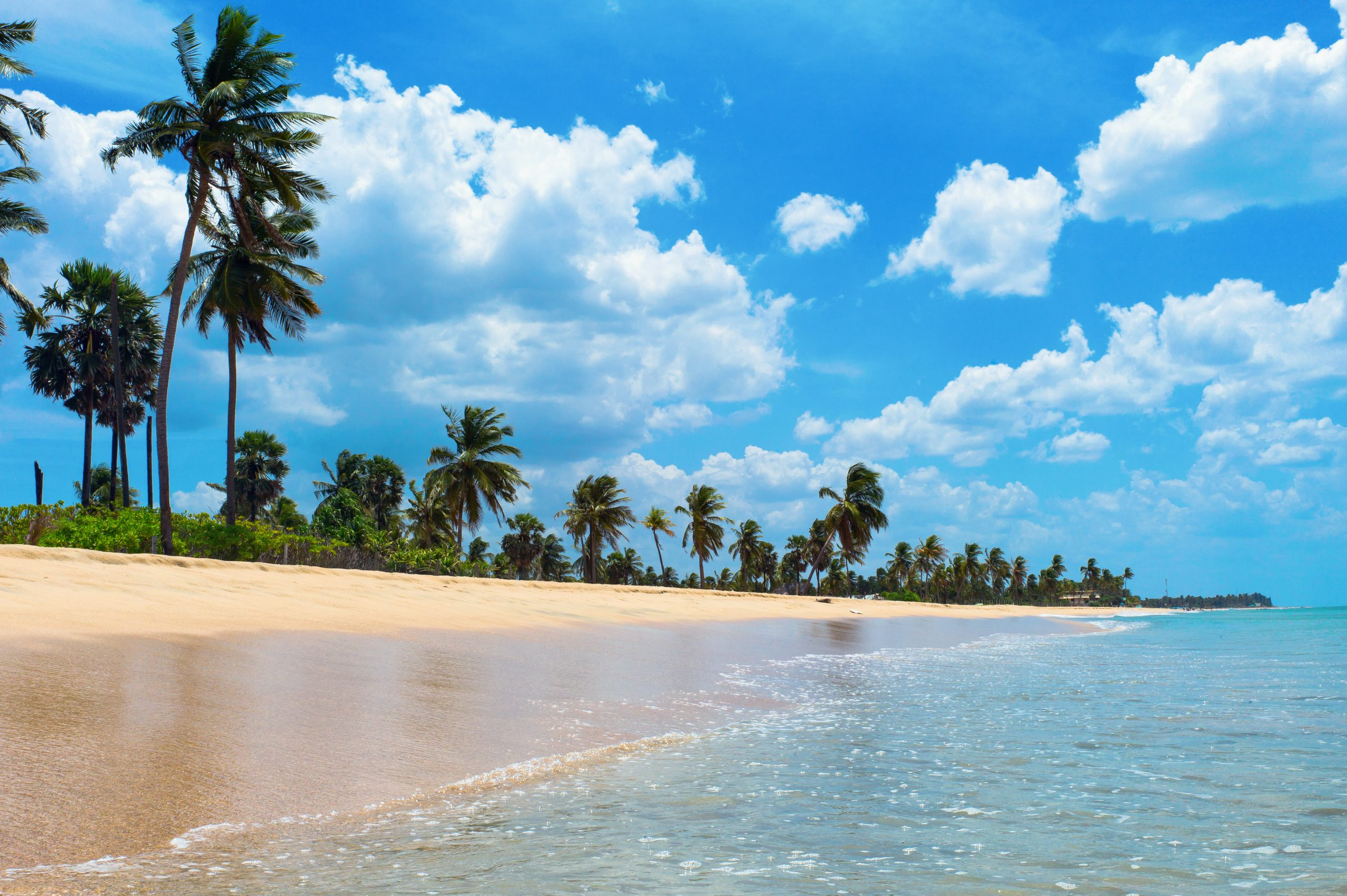 view of clear white sand beach with palm trees in Trincomalee
