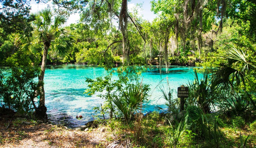 View of Silver Glen Springs in Ocala National Forest