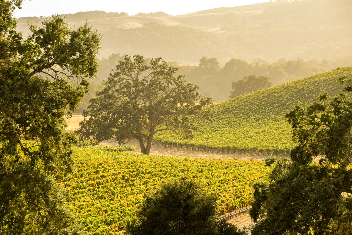 Vineyards in Paso Robles, California