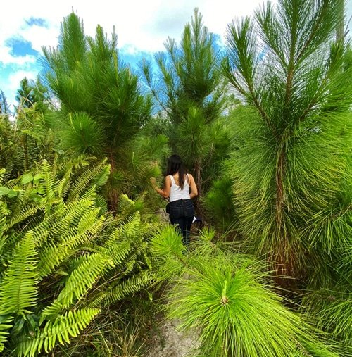 View of the author while wondering in the Pine Tree Forest in Cayey